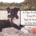 Beat The Heat: 5 Tips to Keep Your Pet Safe, Sound, and Cool
