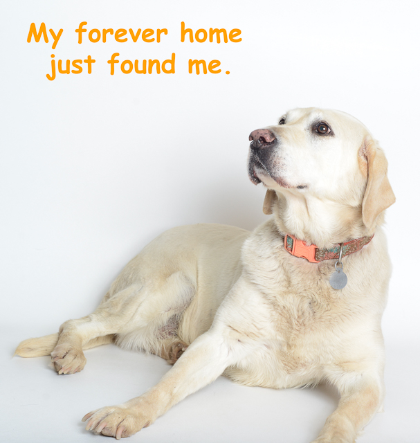 forever home just found me