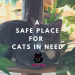 Kitty City at Wildhorse Ranch Rescue: A Safe Place for Kitty Cats