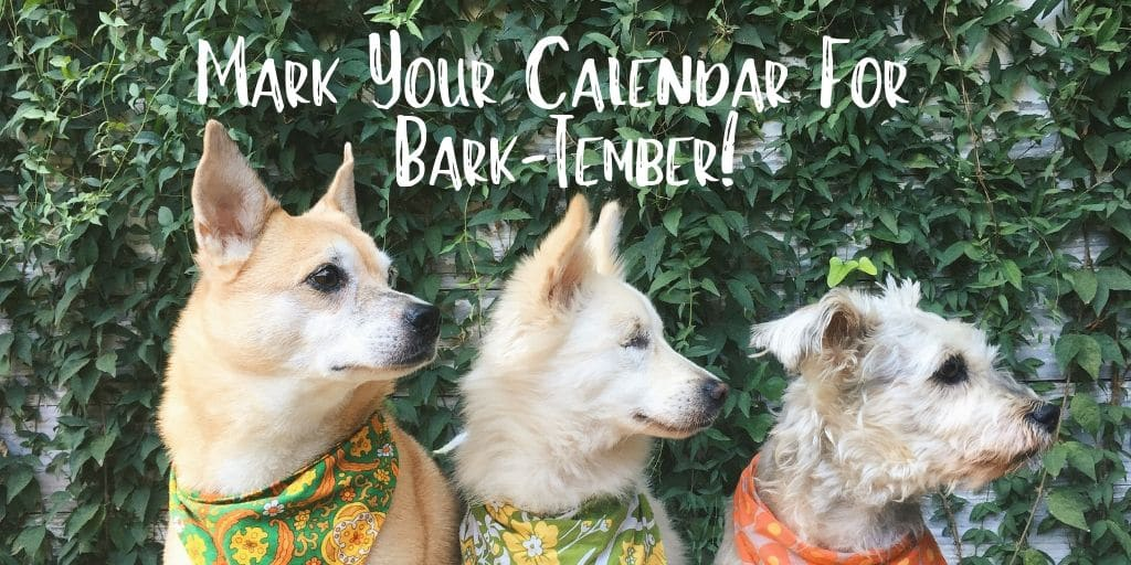 Mark your calendars for Bark-tember! This dog friendly event will be held from 9 AM to 1 PM on September 14, 2019 at OHSO Brewery- Paradise Valley in Phoenix, AZ, US.