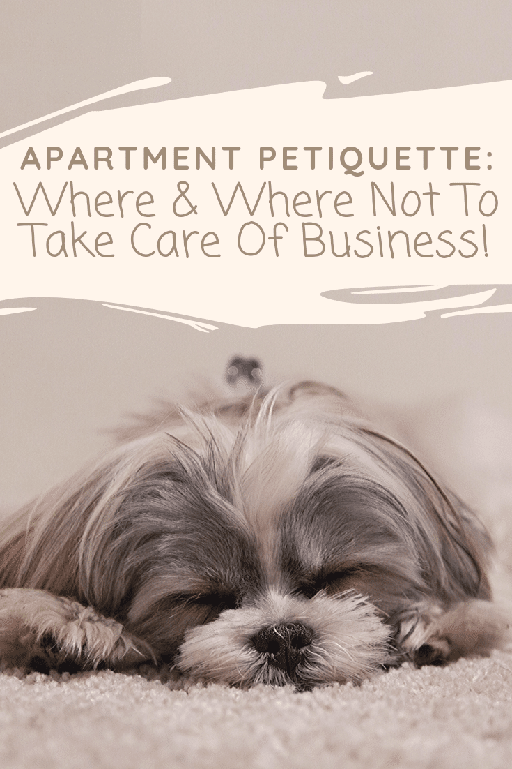"Petiquette or pet etiquette, is a hot topic with the growing number of pets living in apartment communities. This week's petiquette guidelines will keep you from being ""that guy"" or ""that gal."" Today we're chatting about knowing where and where not to take care of business with your pets!"